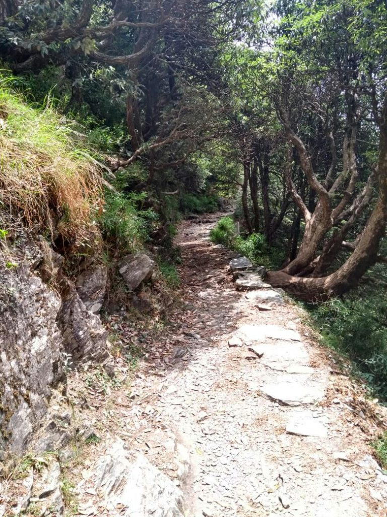Forest Path to Triund